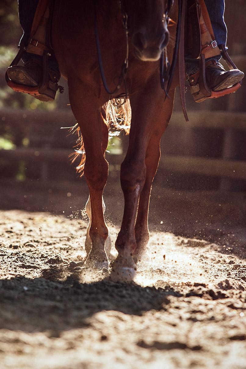 Cavalier a cheval Westerlies